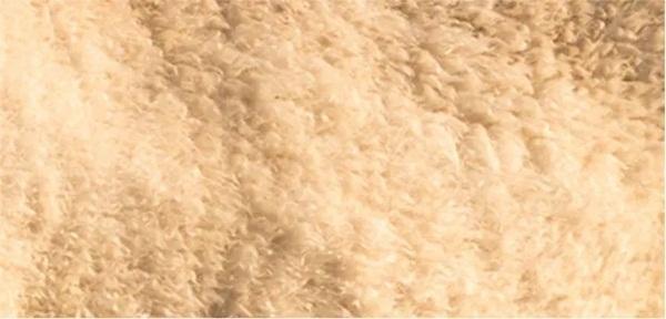 Nhìn lông đoán động vật - 5