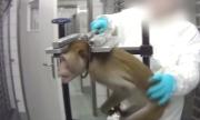 Bí mật kinh hoàng trong phòng thí nghiệm động vật