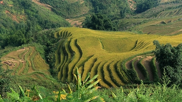 Cao nguyên Sapa nằm ở tỉnh Lào Cai cũng là một điểm đến thu hút những du khách ưa phiêu lưu, ưa thích không khí trong lành. Nơi đây có những thác nước huyền diệu, ruộng bậc thang, nhà sàn và những chuyến trecking đầy thử thách. Lào Cai có đỉnh Fansipan cao 1.613m, cao nhất Việt Nam, được mệnh danh là Nóc nhà Đông Dương. Thời gian tốt nhất để ghé thăm là tháng 4 và tháng 5, ngay trước khi những cơn mưa mùa hè xuất hiện. Ảnh: AFP.