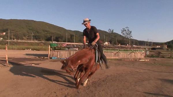 Ngựa Jingang không thích bị cưỡi lên lưng.