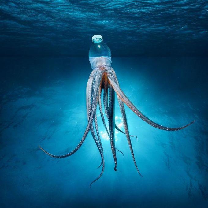 <p> Bức ảnh đầu chai nước - thân bạch tuộc cảnh báo con người về sự ô nhiễm rác thải nhựa ở đại dương.</p>