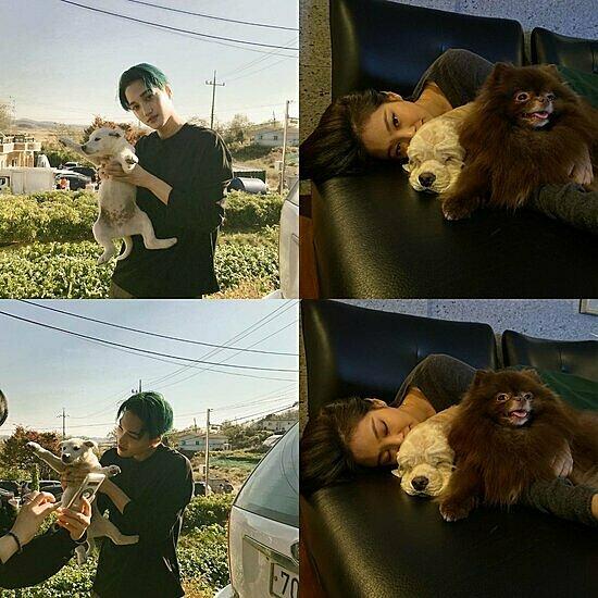 Jennie và Kai đều đăng hình với cún cưng trong những thời điểm gần nhau.