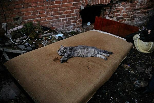 Mèo tỉnh sau 7 phút và được để nằm hồi phục trên sofa,