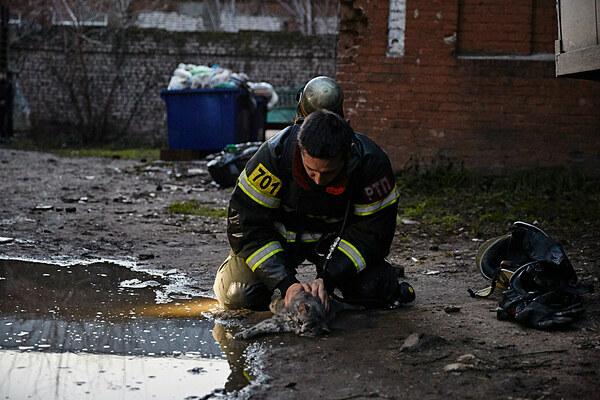 Lính cứu hỏa làm mọi phương pháp để cứu giúp con vật.