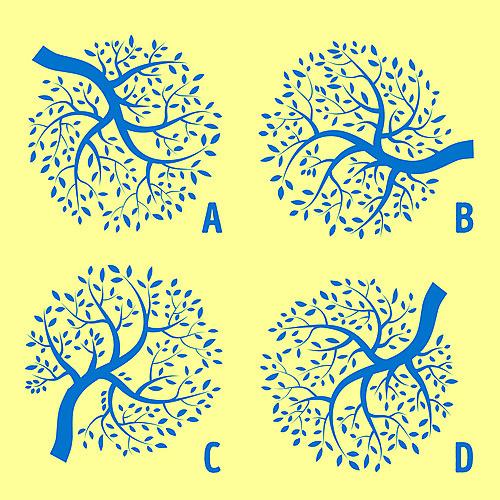 5 thử thách cho thấy bạn có đôi mắt cú vọ (4) - 2