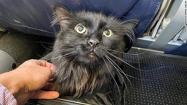 Mèo Sasha trên máy bay trở về Portland hôm 19/11.