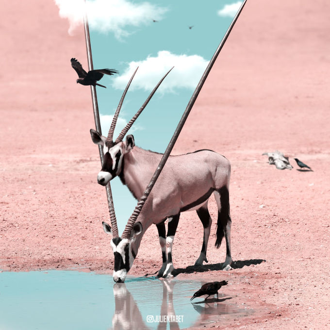 <p> Các tác phẩm của Julien là sự kết hợp của hình ảnh động vật, sự tưởng tượng pha chút lãng mạn.</p>