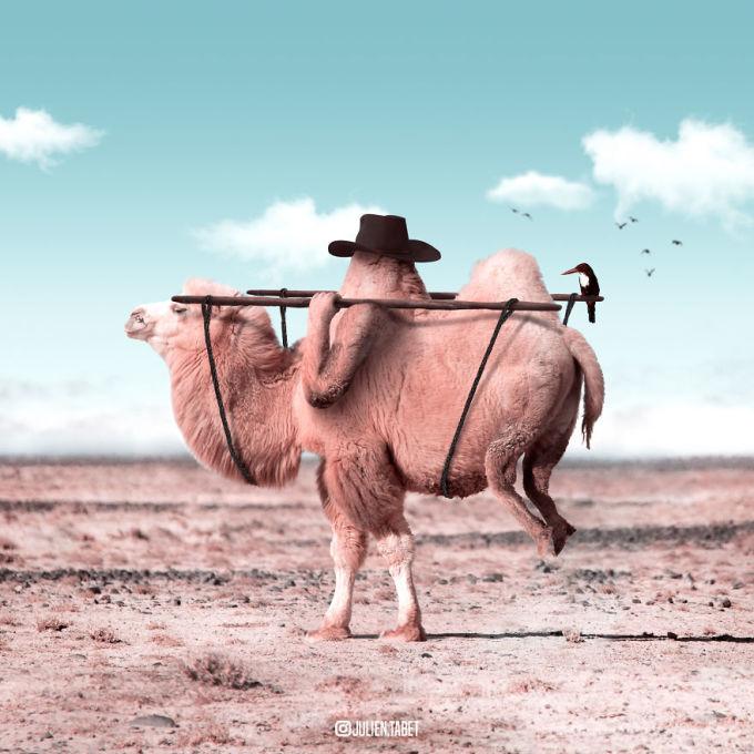 <p> Một bức hình tưởng tượng độc đáo về cuộc sống của lạc đà.</p>