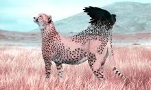Những bức ảnh chế lãng mạn về động vật