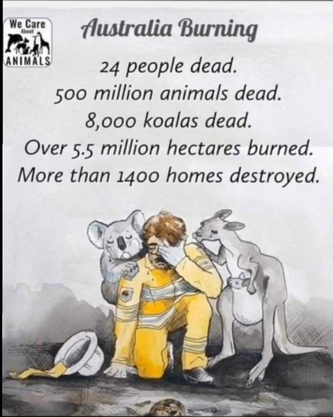 """<p> Thiệt hại thống kê từ cháy rừng: 25 người chết (tính đến 5/1), gần <a href=""""https://ione.vnexpress.net/tin-tuc/nhip-song/hong/gan-nua-ty-dong-vat-chet-vi-chay-rung-o-australia-4037062.html"""" rel=""""nofollow"""">500 triệu động vật </a>chết, 8.000 con gấu Koalas chết, 5,5 triệu ha rừng bị tàn phá cùng 1.400 ngôi nhà bị phá hủy.</p>"""