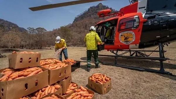 Hơn 1.000 kg cà rốt và khoai lang được huy động để cứu động vật.