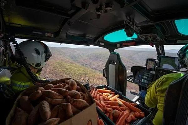 Hai loại rau củ này được thả xuống từ trực thăng.