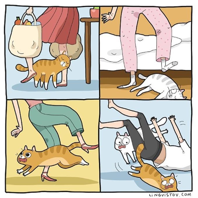 """<p> Lũ mèo có thể ngủ ở bất kỳ đâu, quẩn quanh nơi chân bạn cho đến khi bạn luống cuống và trượt chân vì cố tránh chúng. Chúng nhanh chân chạy mất còn bạn thì """"ngã chổng vó"""".</p>"""