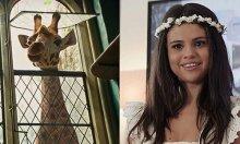 Selena Gomez lồng tiếng nhân vật hươu cao cổ trong 'Dolittle'