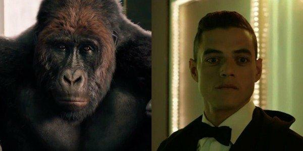 Khỉ đột Chee Chee của Rami Malek.