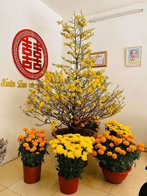 Xuân Lan mua cây may nở vàng rực và vài khóm cúc để trang trí cho căn hộ của mình.