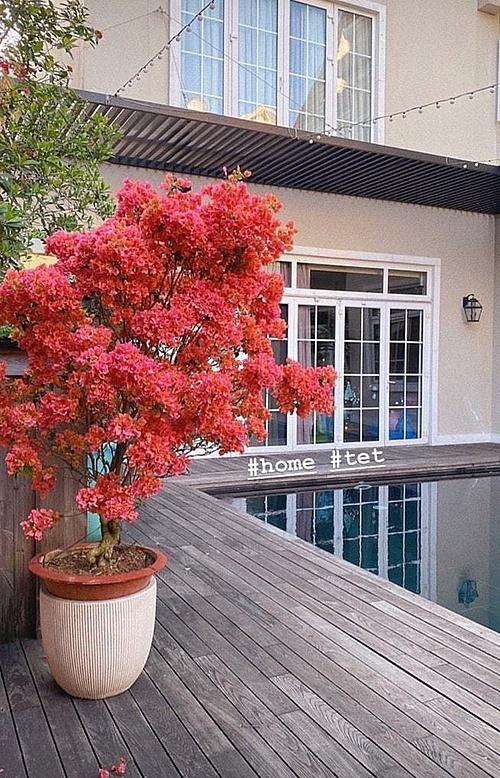 Một góc biệt thự của Tăng Thanh Hà là chậu hoa cao, đơm bông rực rỡ.