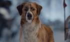 Cuộc chiến sinh tồn của cún cưng sau khi bị bắt cóc
