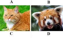 Bạn là 'chuyên gia động vật' nếu trả lời 7/9 câu hỏi về... đuôi