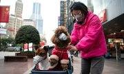 Trung Quốc bị nghi giết vật nuôi để ngăn nCoV lây lan