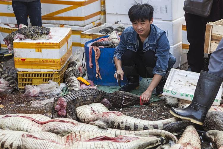 Một người đàn ông chặt thịt cá sấu sống ở khu chợ Quảng Châu, Trung Quốc. Ảnh: EPA.