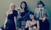 Fan Black Pink nổi giận vì YG chuẩn bị debut girlgroup mới