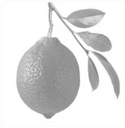 Đố bạn tìm ra quả chanh vàng - 4