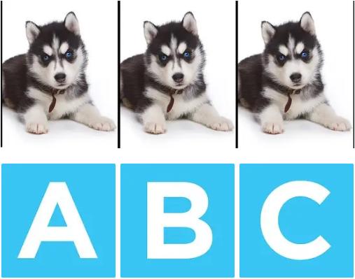 Chú chó nào khác biệt?