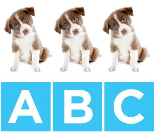 Chú chó nào khác biệt? - 1