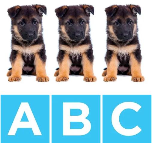Chú chó nào khác biệt? - 3