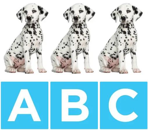 Chú chó nào khác biệt? - 4