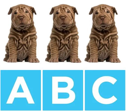 Chú chó nào khác biệt? - 6