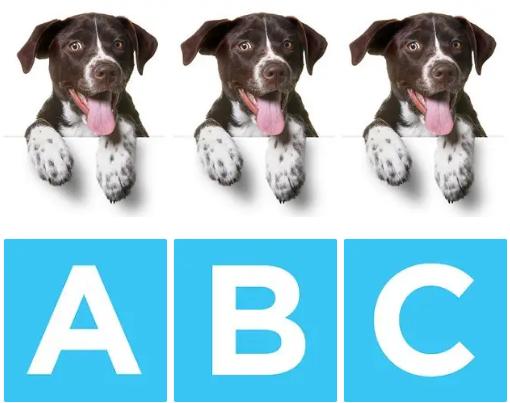Chú chó nào khác biệt? - 7