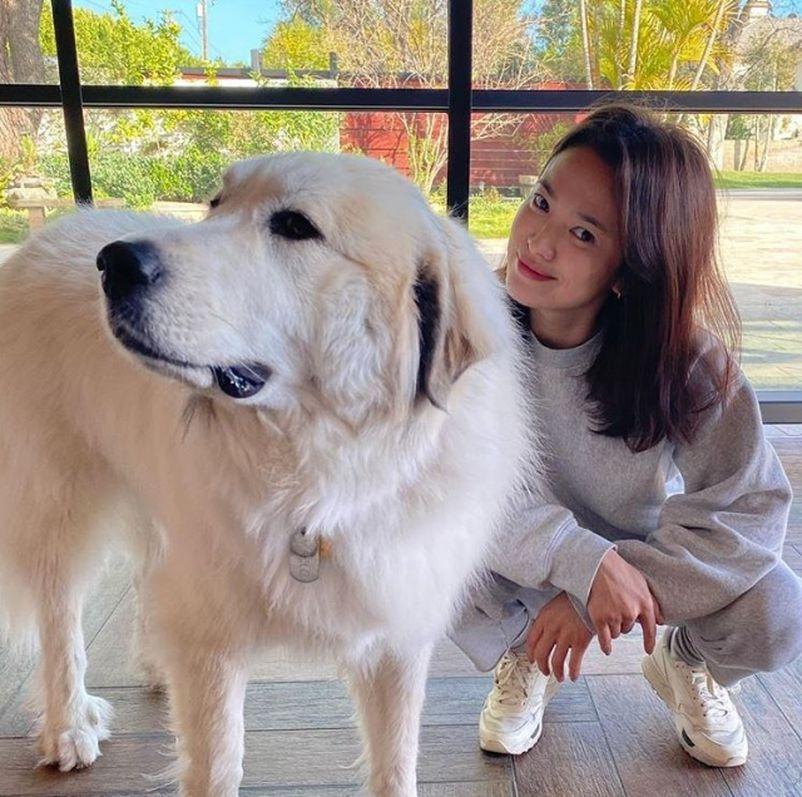 Bạn thân đăng ảnh Song Hye Kyo giản dị, trẻ trung bên chú chó.