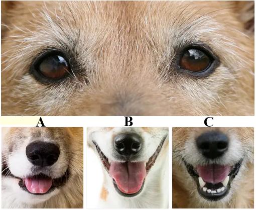 Tìm nụ cười phù hợp với những chú chó - 8