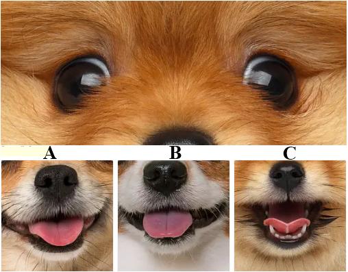 Tìm nụ cười phù hợp với những chú chó - 12