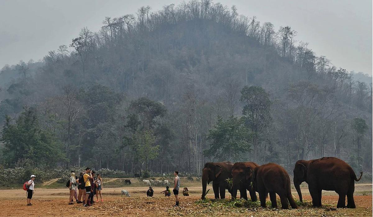 Khách du lịch thường chụp ảnh với voi. Ảnh: AFP.