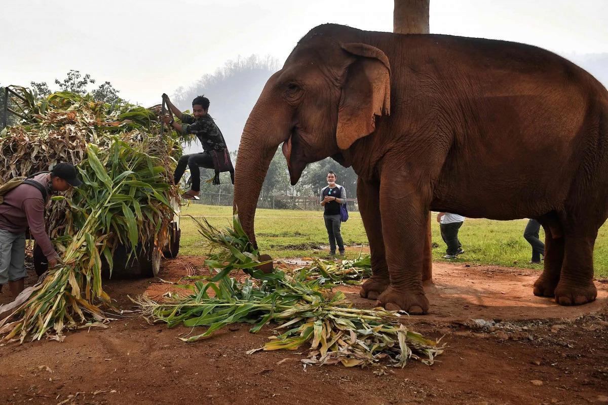 Voi ở công viên ở Chiang Mai. Ảnh: AFP.