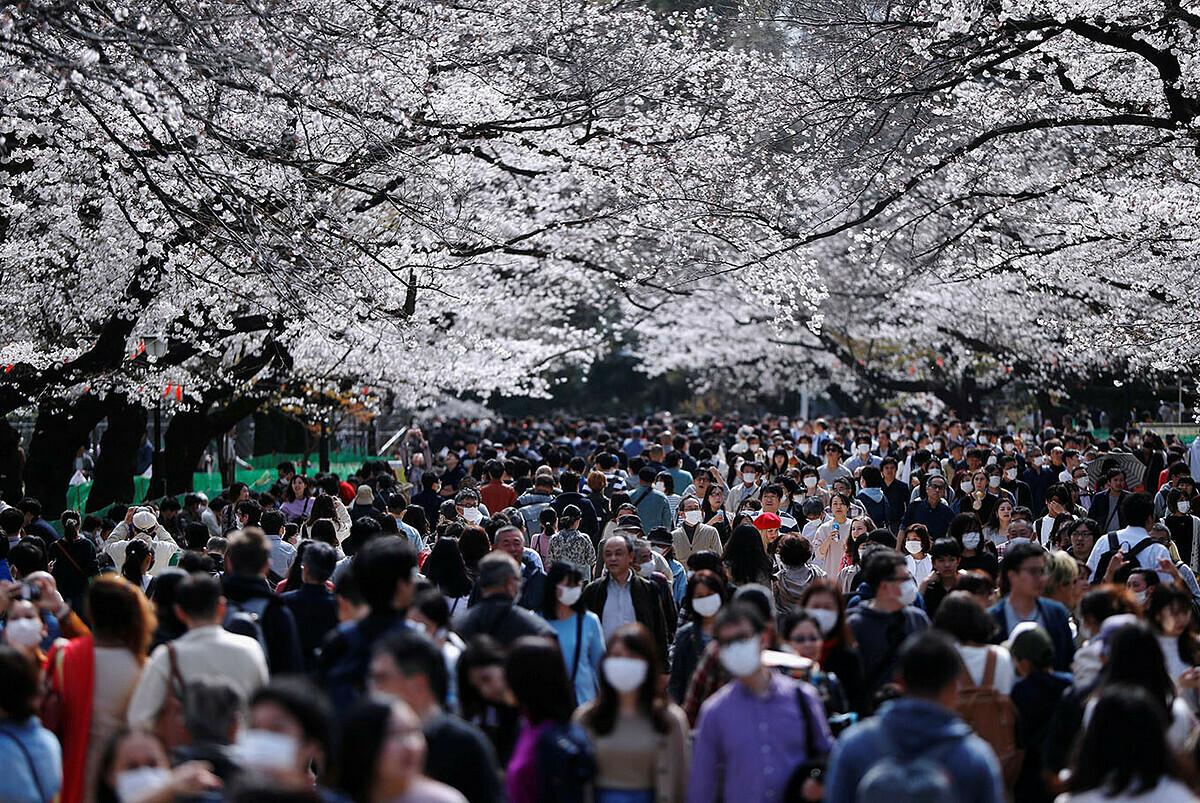 Người Nhật bất chấp đi ngắm hoa anh đào giữa thời dịch Covid-19. Ảnh: Reuters.