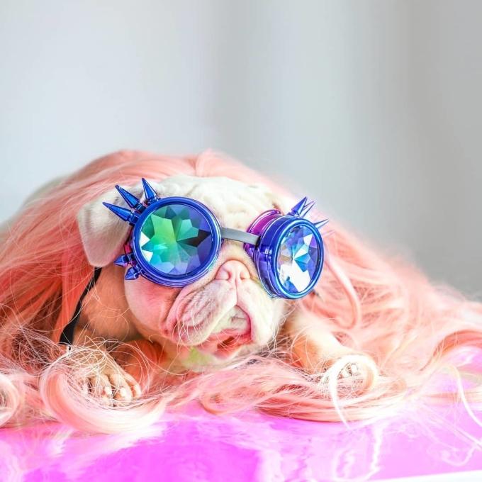 """<p class=""""Normal"""">Bộ lông kỳ lạ cùng ''gu'' thời trang có 1-0-2 của<span>Milkshake khiến chú chó thu về gần 80 nghìn lượt theo dõi trên trang cá nhân.</span></p>  <p class=""""Normal""""><span>Cùng ngắm nhìn những khoảnh khắc đáng yêu nhưng cũng không kém phần ''fashionista'' của chú chó nổi tiếng này nhé!</span></p>"""