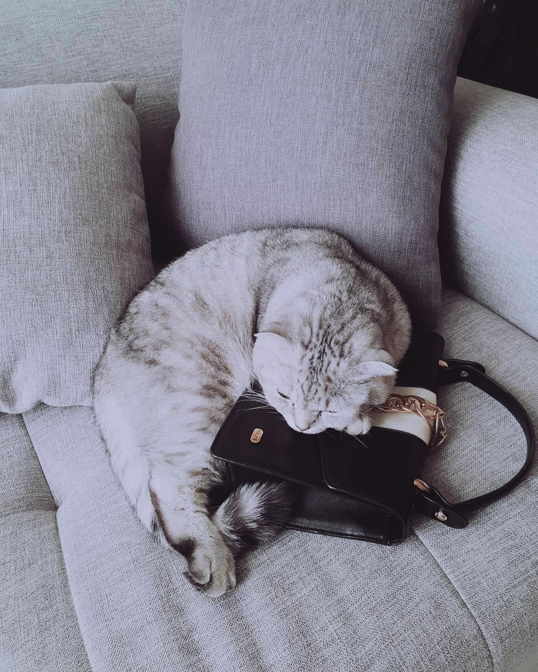 Lucy chảnh mèo khiến Quỳnh Châu phải tổ chức hẳn sinh nhật - 14