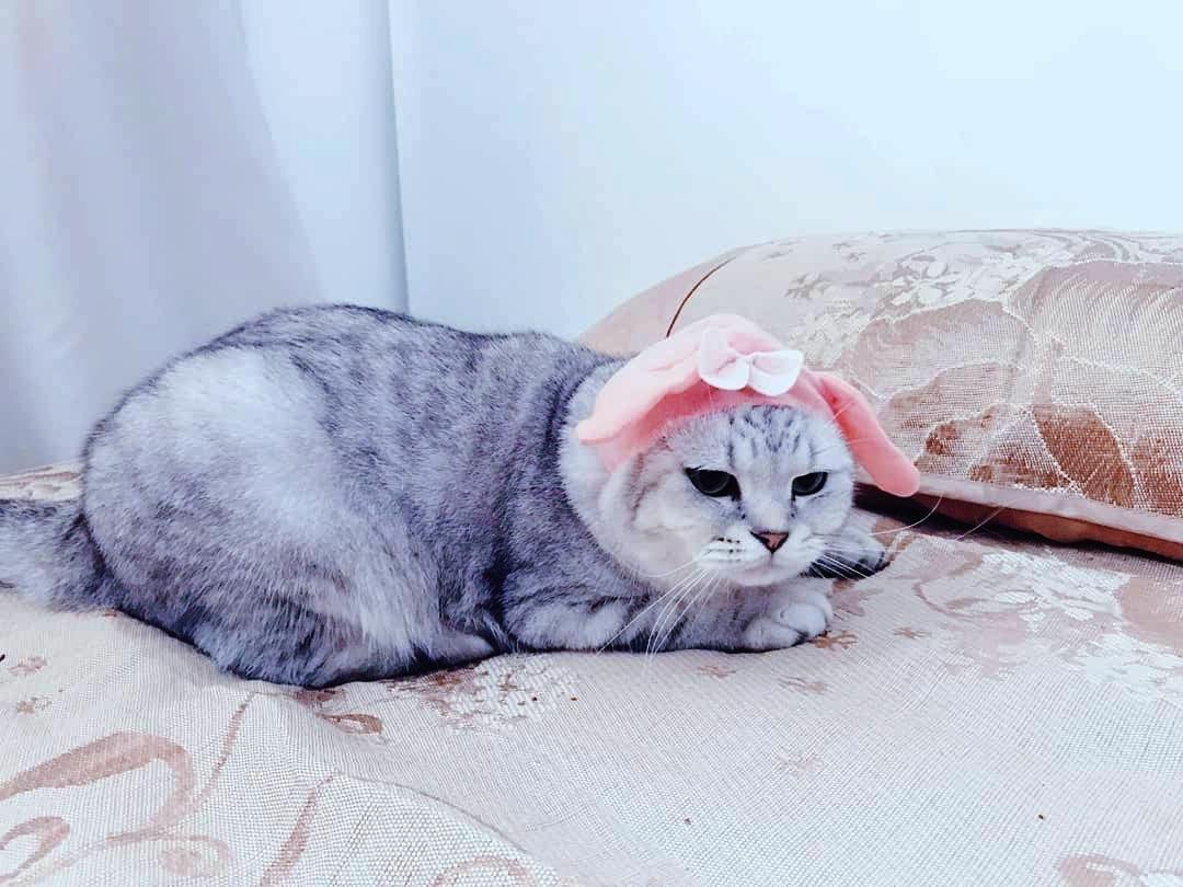 Tính cách của nó được Quỳnh Châu ví von là chảnh mèolà chảnh mèo ngoài lạnh trong ấm.