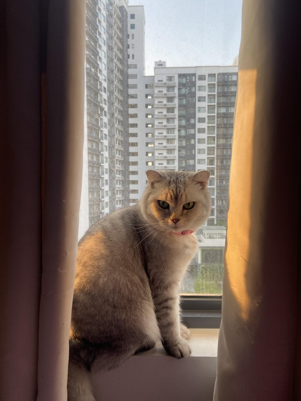Dù lạnh lùng nhưng Lucy rất biết cách quan tâm chủ nhân. Mỗi lần về nhà, Lucy liền chạy đến quấn quýt Quỳnh Châu không rời.