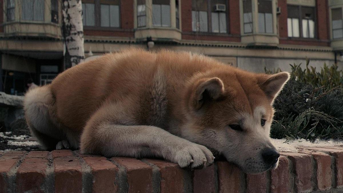 Ở nhà trốn dịch xem gì: Khóc hết nước mắt với 4 phim về cún cưng - 5