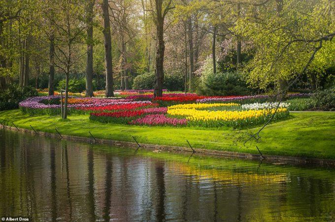 """<p class=""""Normal"""">Albert cho biết anh muốn''cho thế giới thấy vẻ đẹp của khu vườn khi mọi người không thể ghé thăm nó trong năm nay''.</p>"""