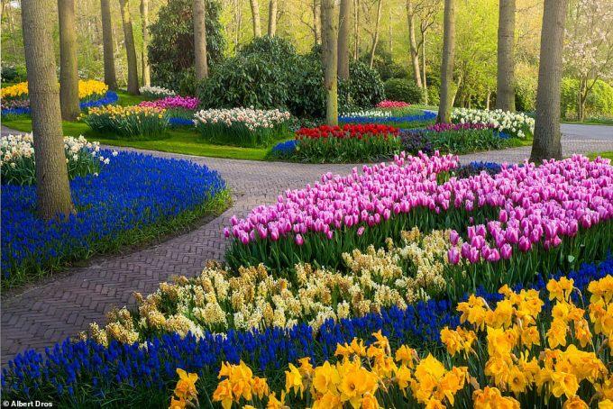 """<p class=""""Normal"""">Keukenhof nổi tiếng với hoa tulip nhưng cũng có các loài hoa khác bao gồm thủy tiên, loa kèn và hoa hồng.</p>"""