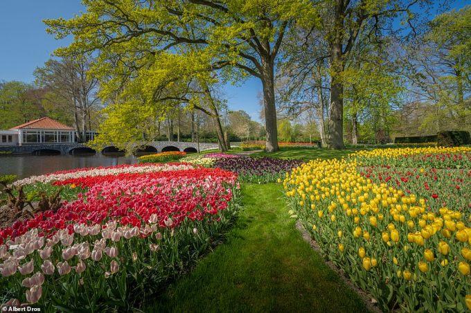 """<p class=""""Normal"""">Keukenhof mở cửa cho công chúng trong 2 thángtừ 21/3 đến giữa tháng 5 hàng năm.Năm ngoái vườn hoa đã đón 1,5 triệu lượt khách tham quan.</p>"""