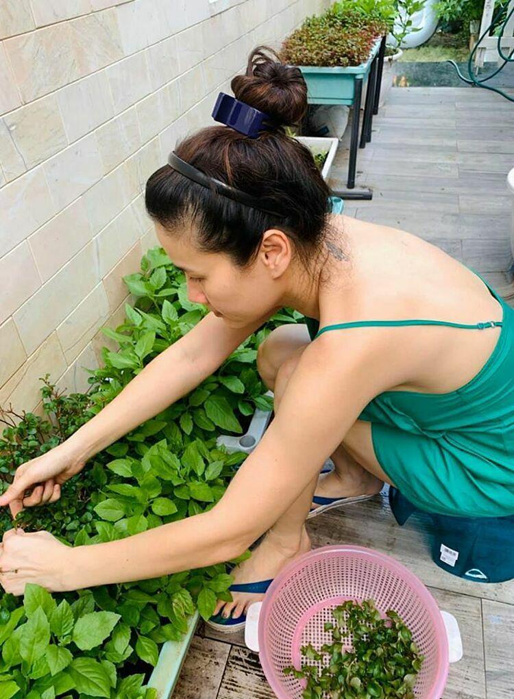 Lịch trình công việc bận rộn và phải chăm con nhỏ nhưng Thân Thúy Hà mỗi ngày vẫn cố gắng ra thăm vườn, tự tay tưới nước, cắt tỉa lá.