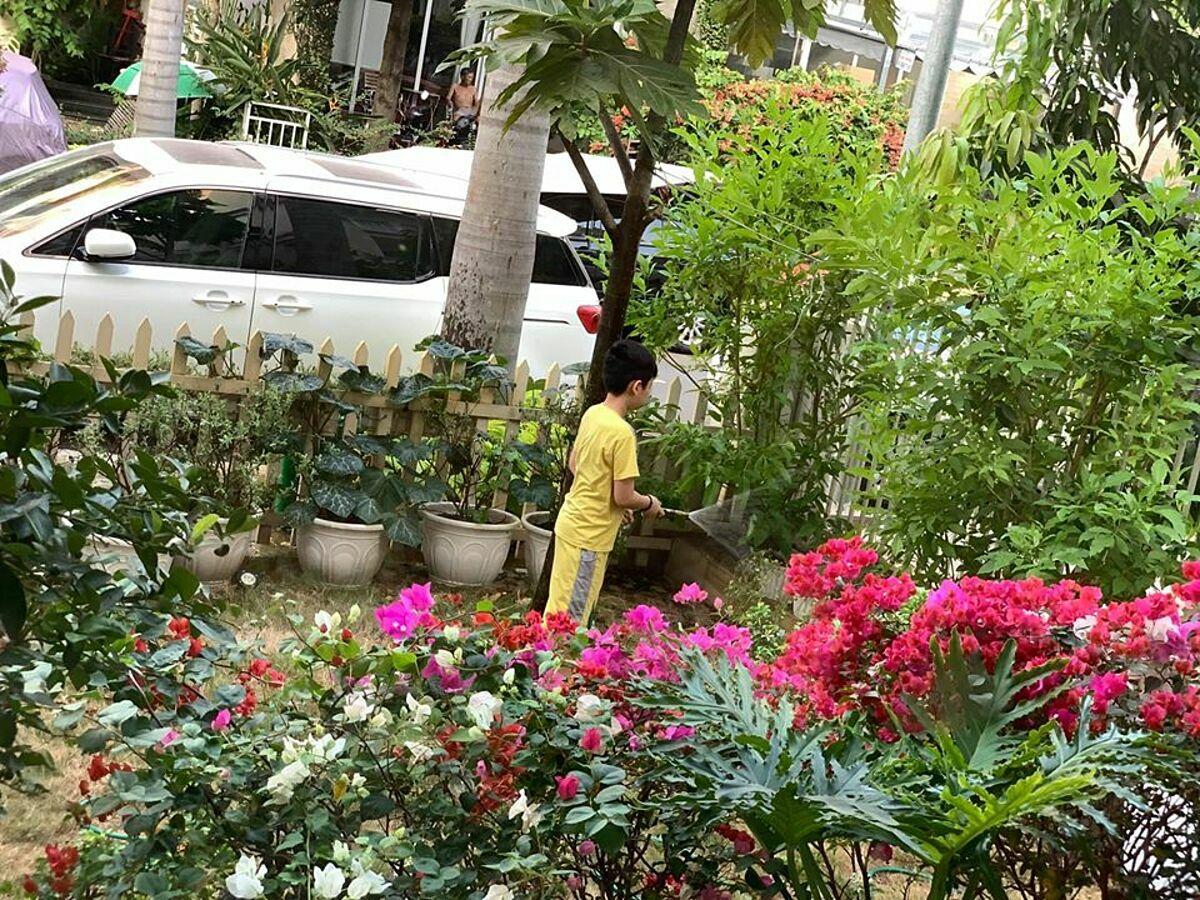 Ngoài rau, khu vườn của Thân Thúy Hà trồng nhiều loại hoa, cây cảnh. Bé Duy Anh giúp mẹ tưới tiêu cho khu vườn.