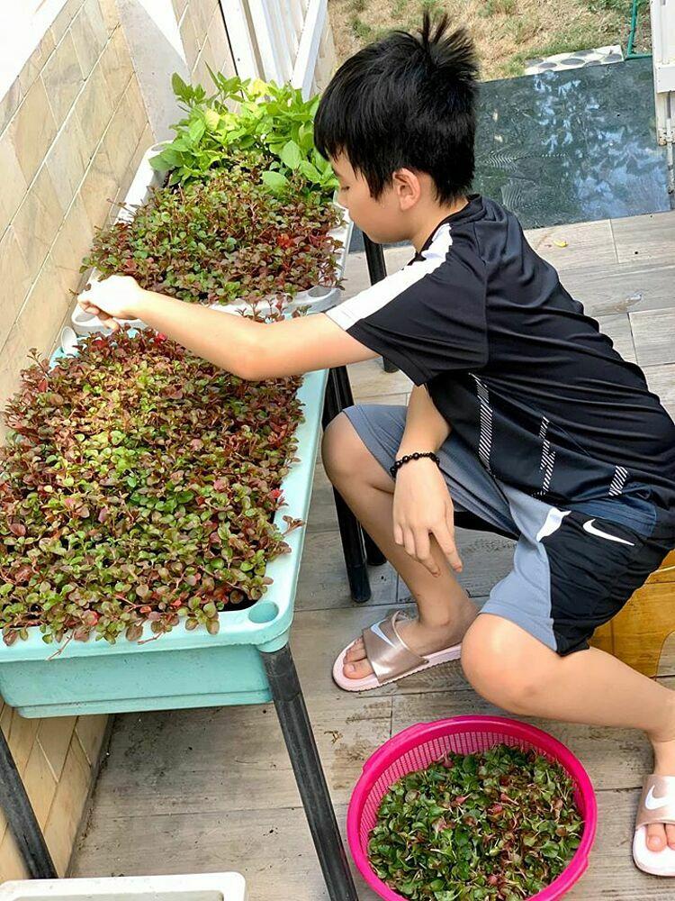 Bé Duy Anh - con trai Thân Thúy Hà - giúp mẹ hái rau xà lách xoong nhật. Đây là loại rau Tăng Thanh Hà khuyên đàn chị nên trồng nhiều trong vườn bởi có nhiều công dụng chữa bệnh, rau có độ ngon ngọt.